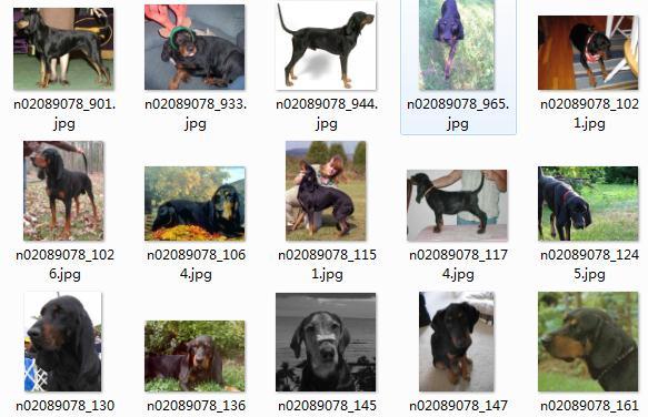世界各地狗数据集