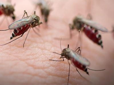 疟疾细胞图像数据集