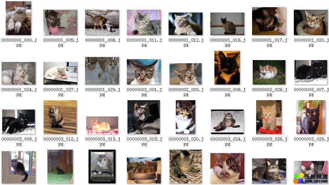 著名的猫标注图像数据