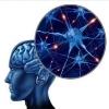 神经网络训练tricks