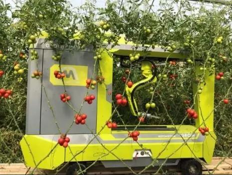 Servotronix系统升级番茄采摘机器人!