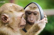 用图像控制猴子大脑,哈佛大学是如何用算法