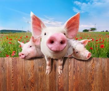 浅析猪脸识别的困难及可行性