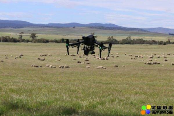 以无人机取代牧羊犬,加入狗吠声协助驱赶羊群